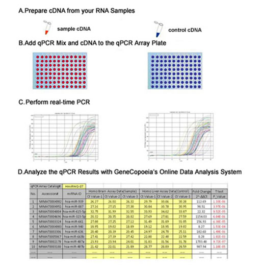 Gene qPCR array experimental work flow