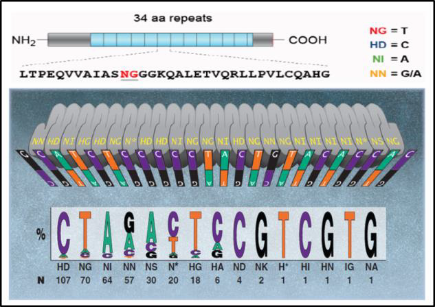 TALEN-mediated_gene_knockout_A-m