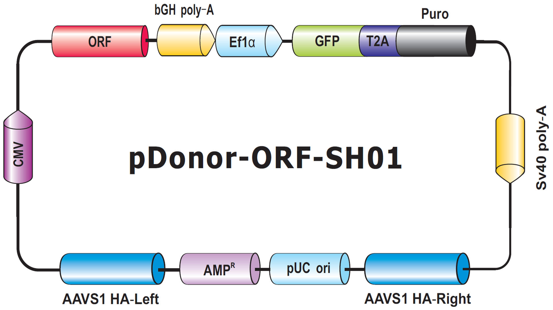 pDonor-SH01-modifed