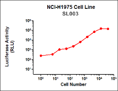 SL003 (NCI-H1975 Lung Cancer Cell Line)