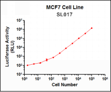SL017 (MCF7 Breast Cancer Cell Line)