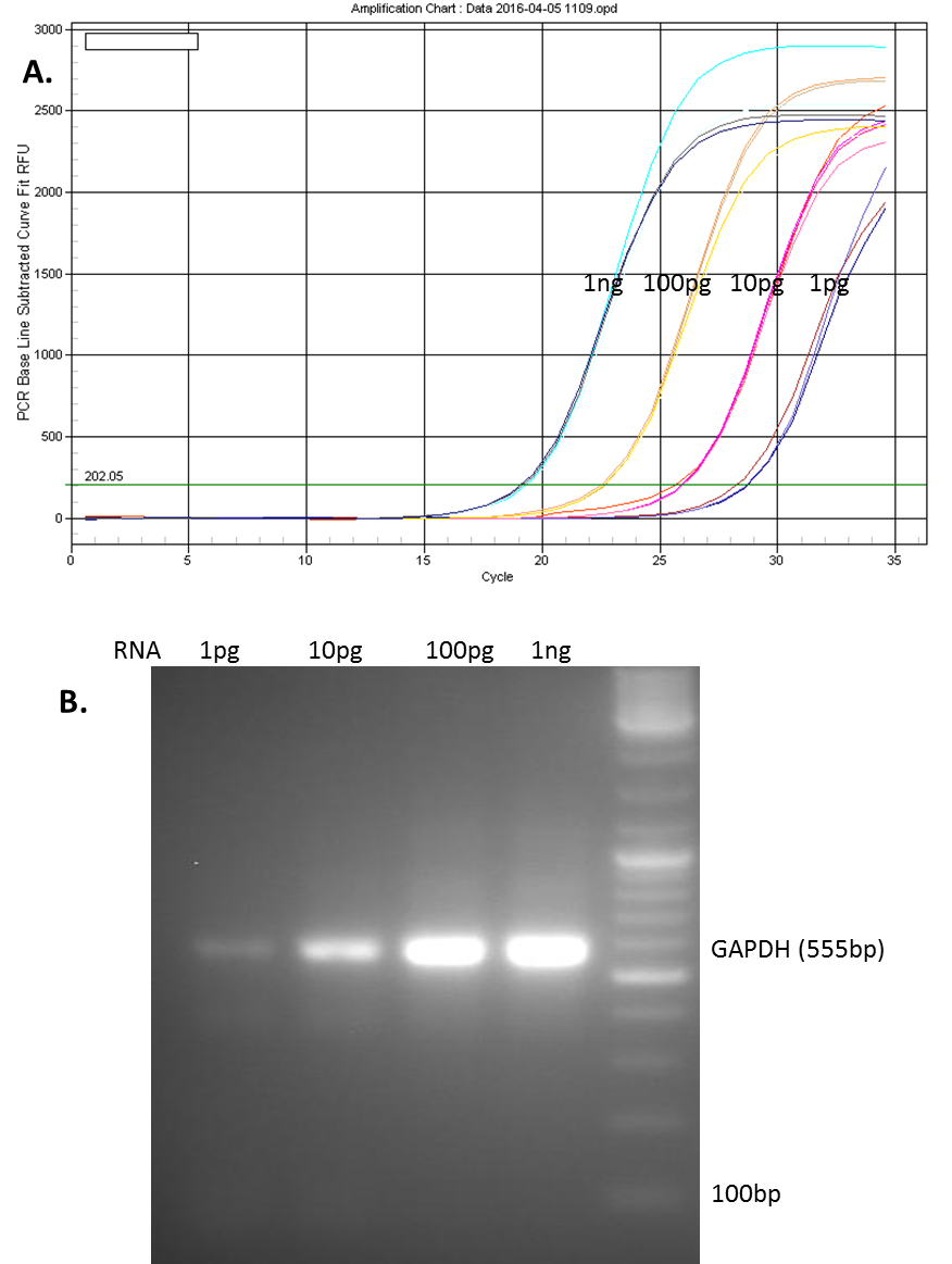All-in-One™ qPCR Mix and Validated Primers   Genecopoeia