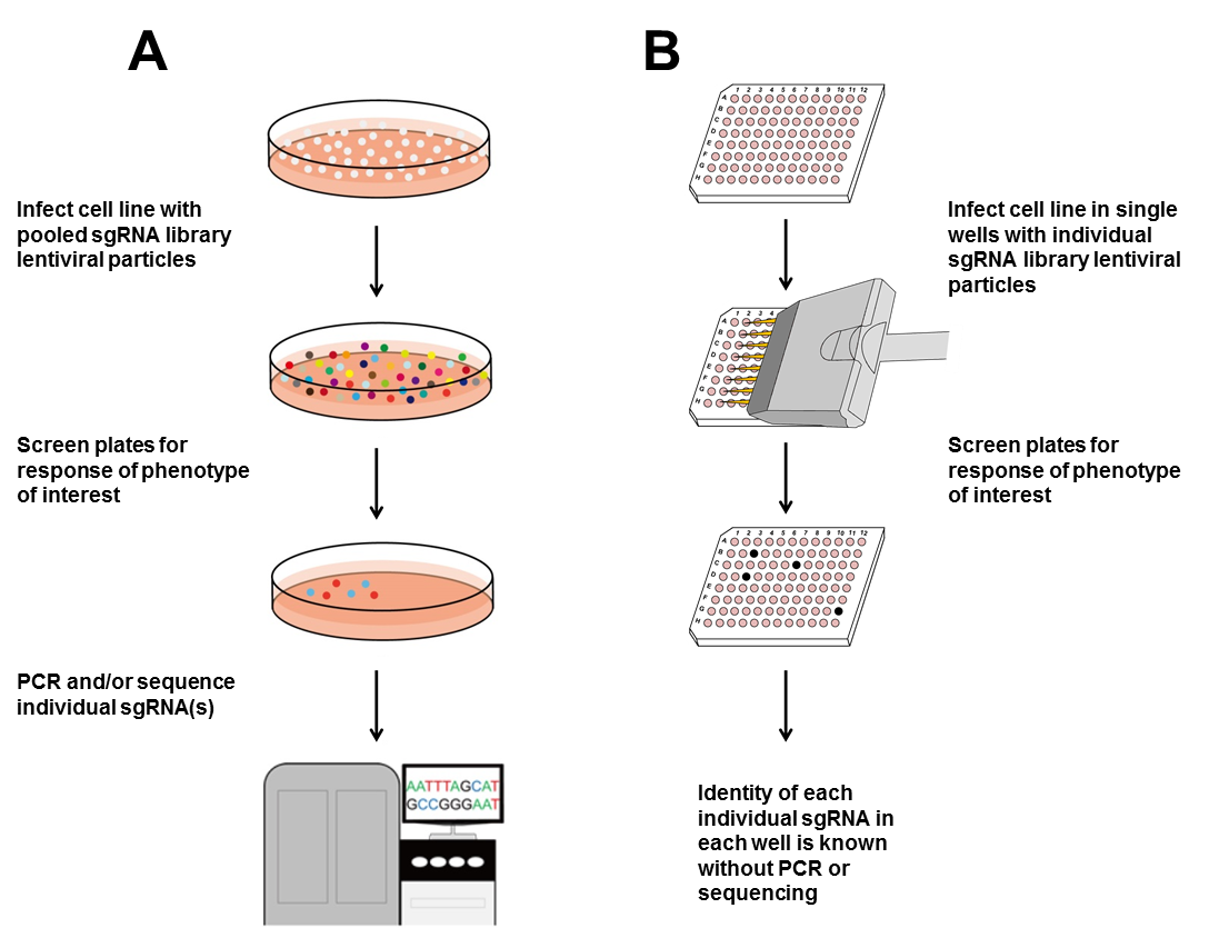 how to create a cell line