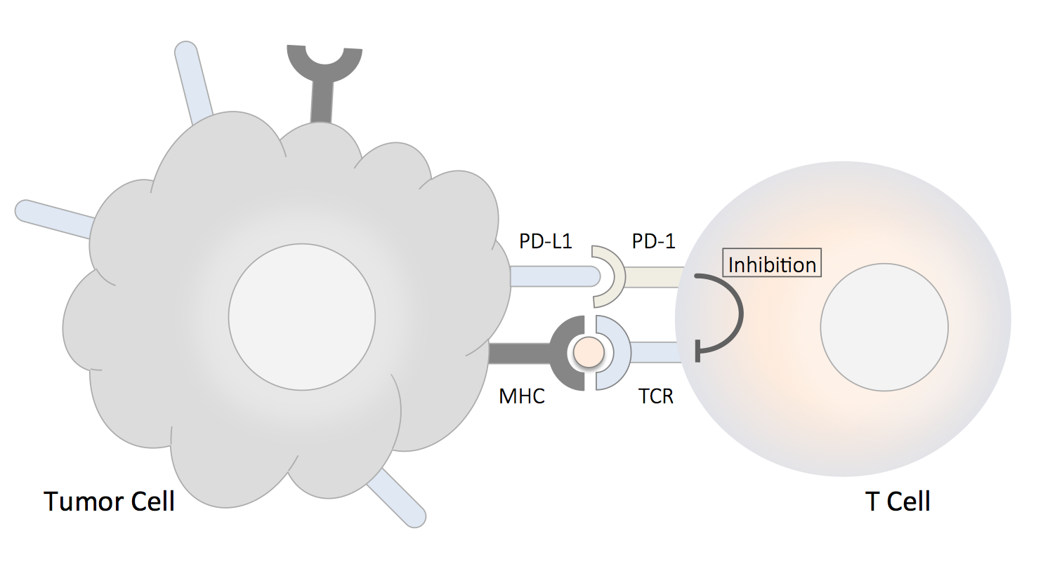 PD-1, PD-L1 Pathway