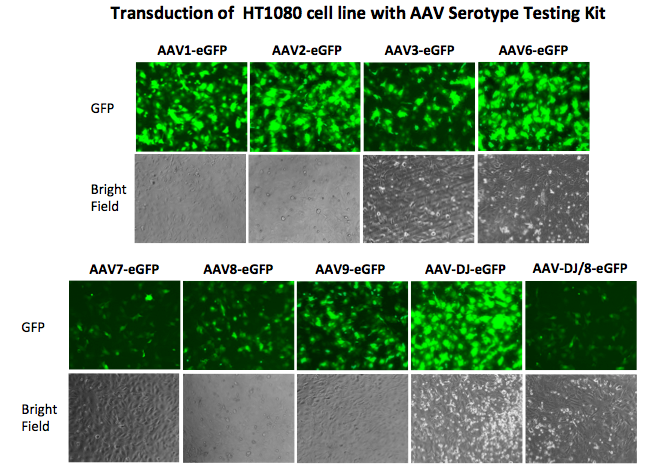 AAV serotype testing kit