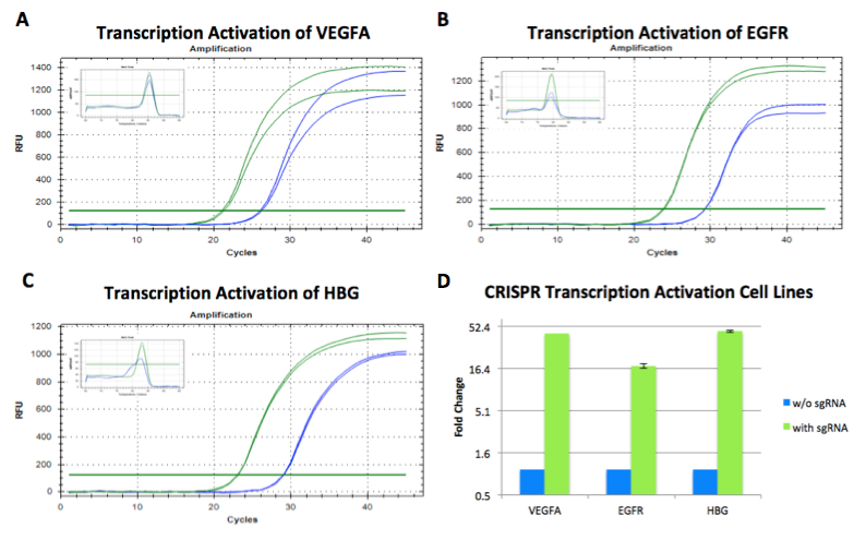 CRISPR transcription activation in cell line SL302