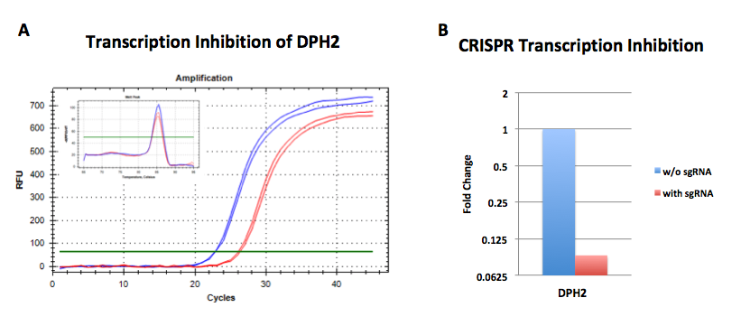 CRISPR transcription inhibition in cell line SL372