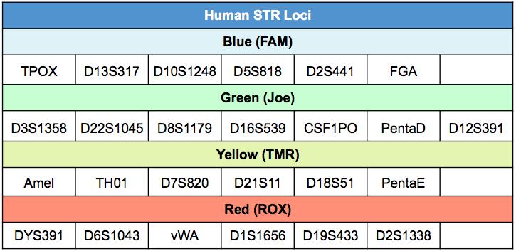 Human STR loci
