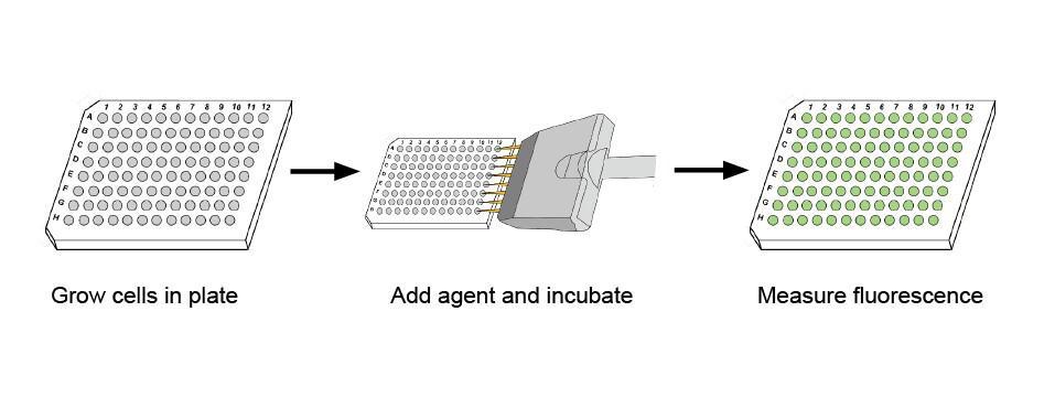 bio rad imark microplate reader manual